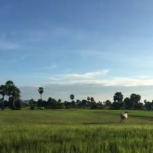 cambodia-voluntario